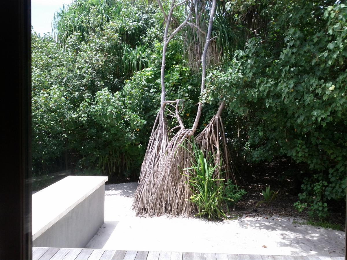 park-hyatt-maldives-hadahaa-garden-villa-view