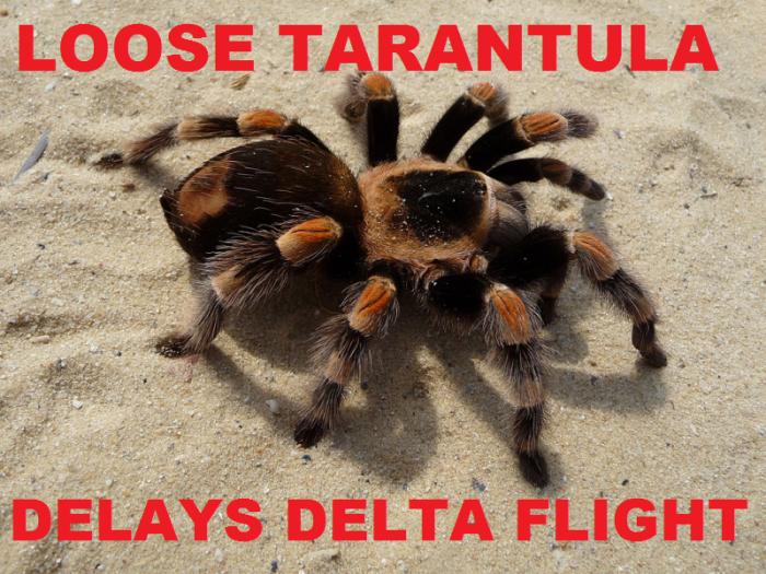 Delta Trantula