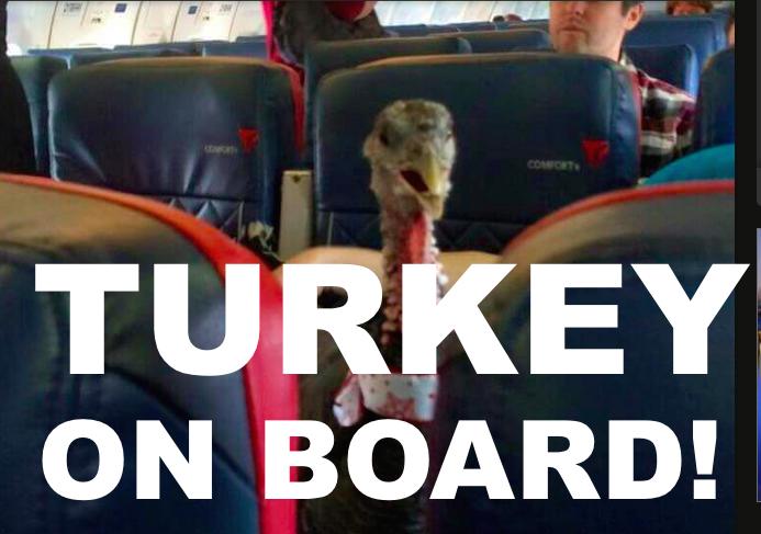 Turkey On Board