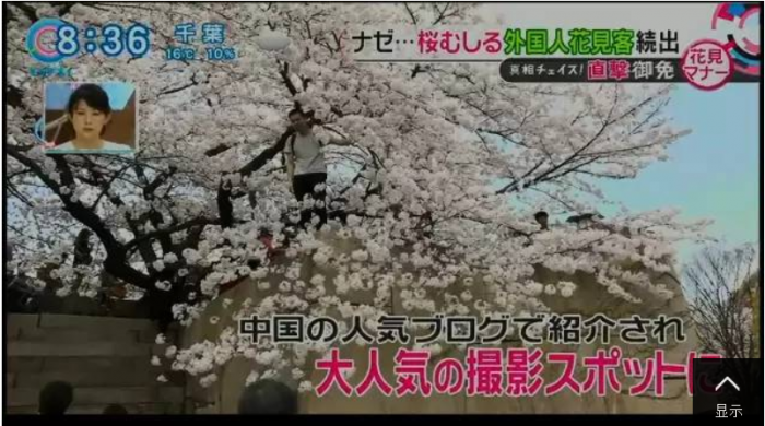Chinese Tourists Cherry Season Japan 2
